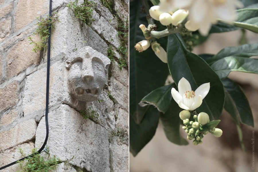Hvar gargoyle and flower