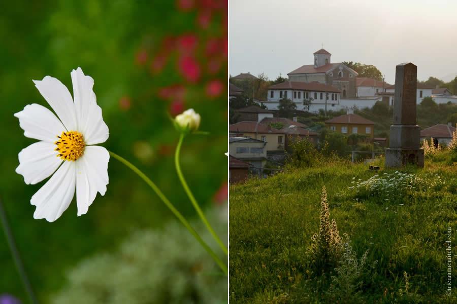 Kalofer Bulgaria Wildflowers