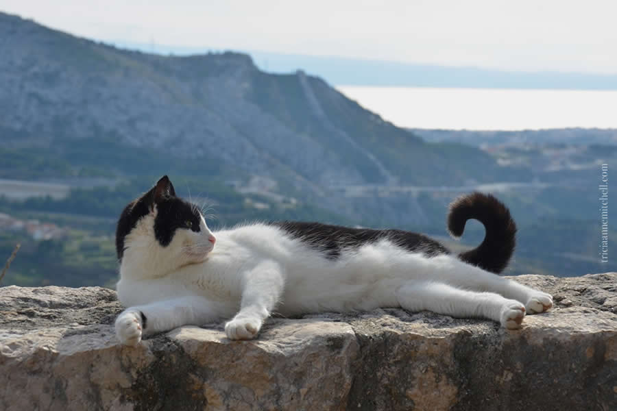 Klis Fortress Tour Cat