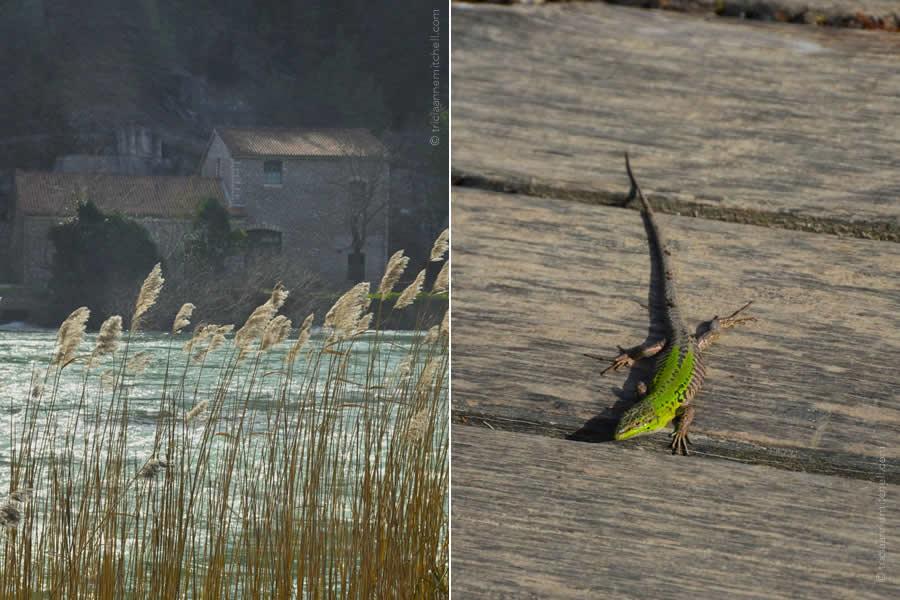 Krka National Park and Lizard