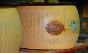 Two wheels of Parmigiano-Reggiano cheese sit on a shelf, aging at the Hombre Farm outside of Modena, Italy.