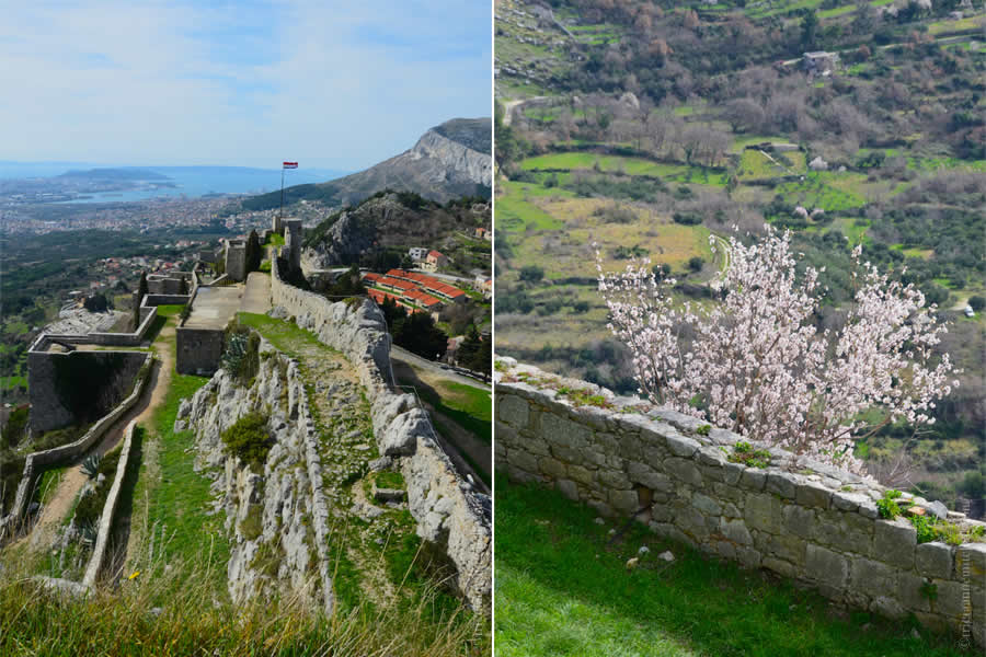 Spring Flowers Klis Fortress