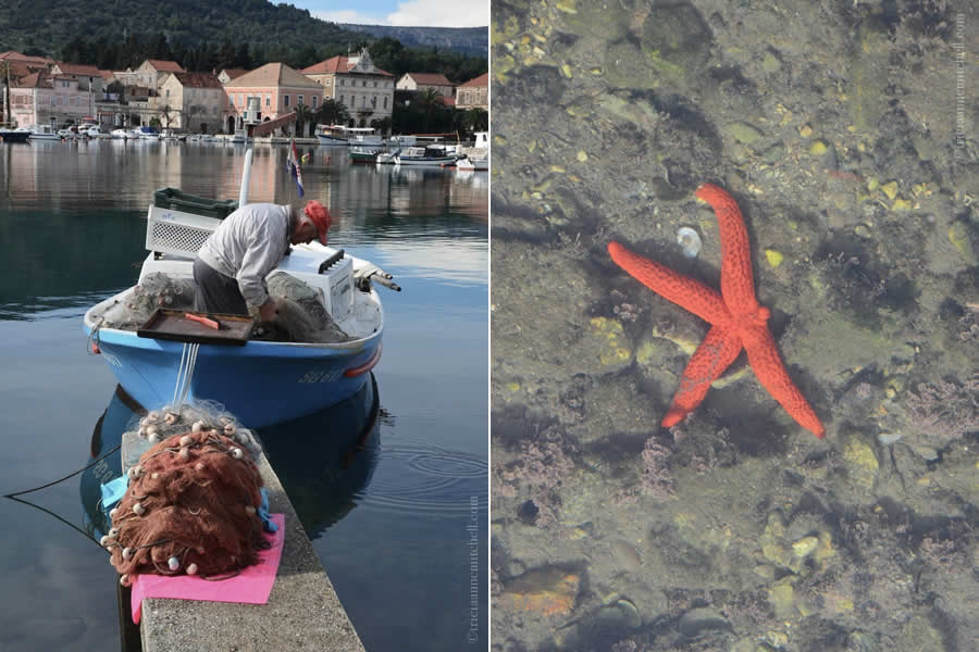 Stari Grad Hvar fisherman and starfish