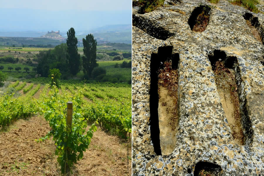 Remelluri Vineyards and Medieval Necropolis