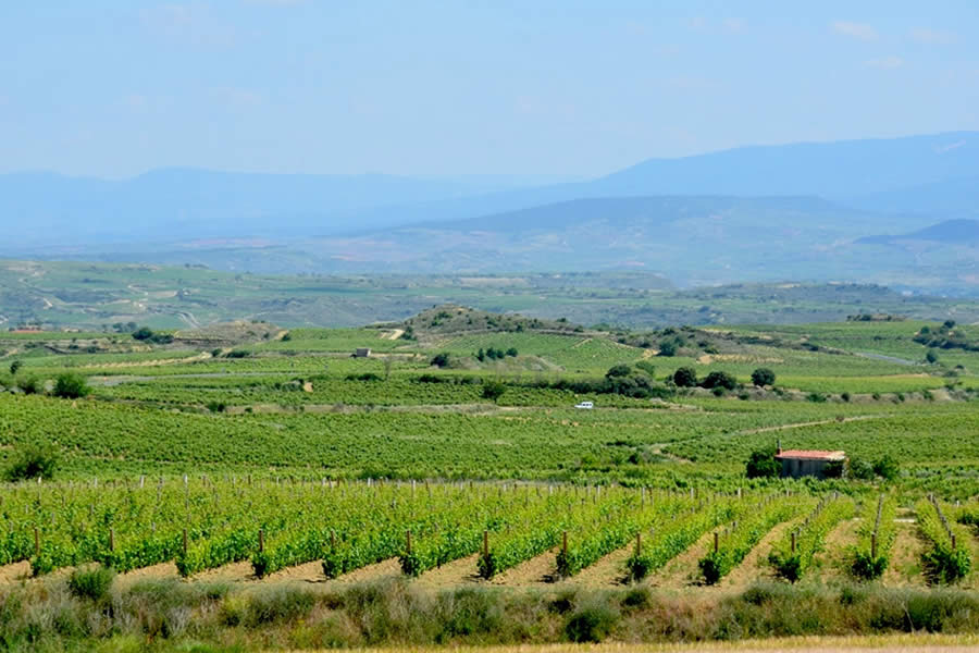 Rioja Wine Tour Vineyards