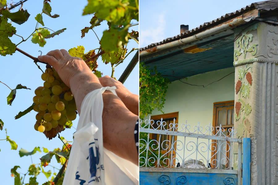 Moldova Grapes Rosu Village