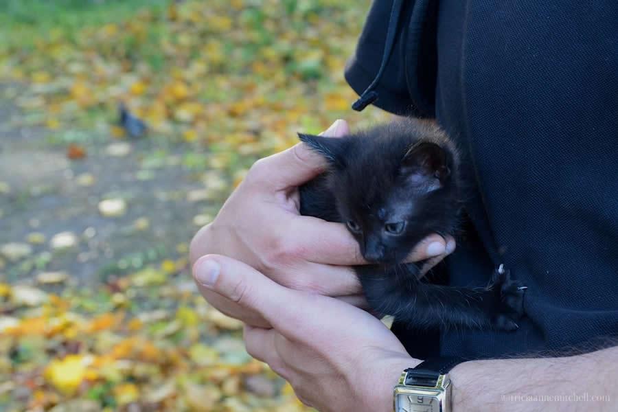 Cocoa Rescued Street Kitten