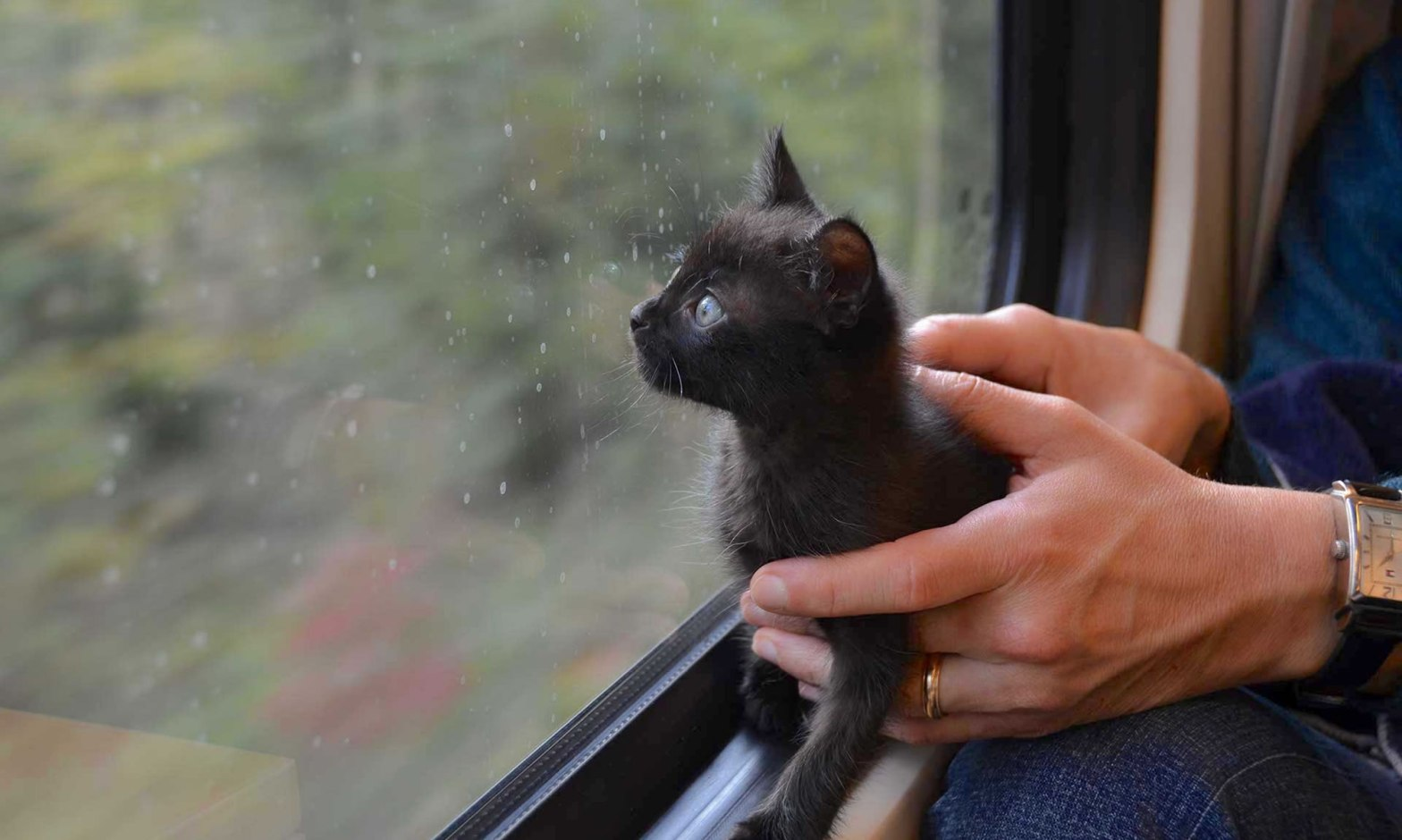 A pair of male hands hold a black kitten, as the animal looks outside through a train's window.