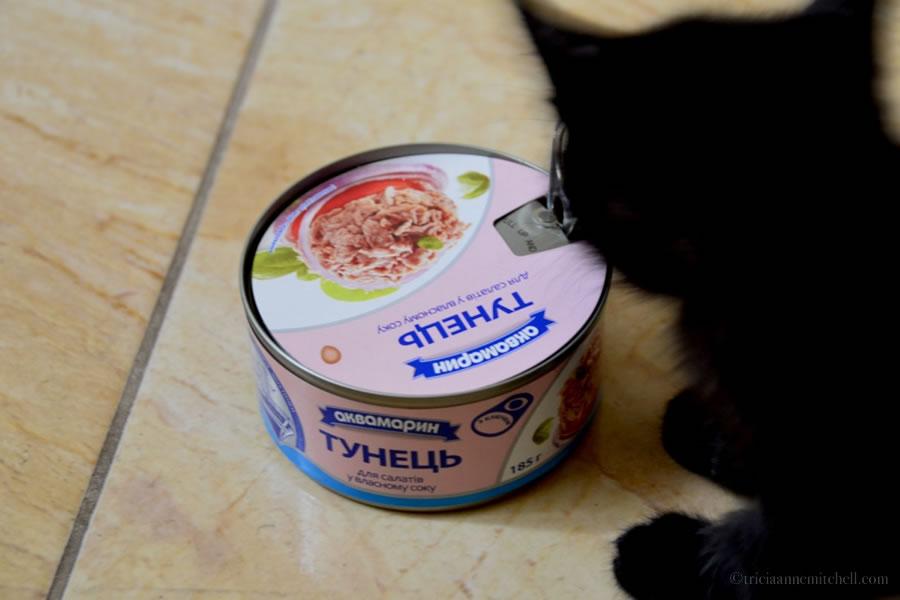 Kitten Tuna Ukraine