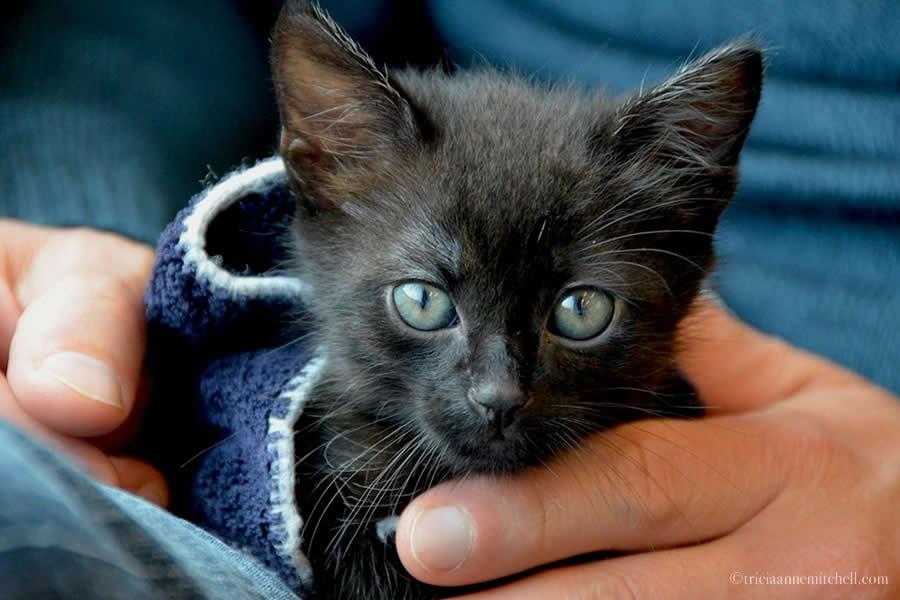 Ukrainian Kitten Cocoa