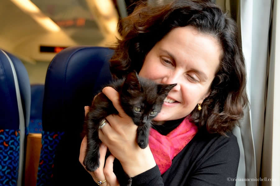 Ukrainian Kitten Riding Train to Germany