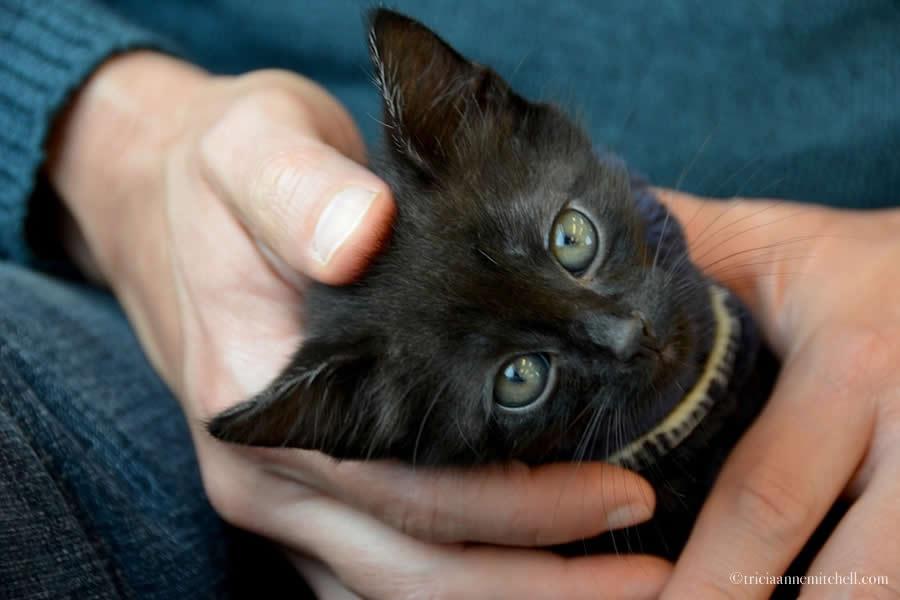 Ukrainian Kitten Waiting for Adoption