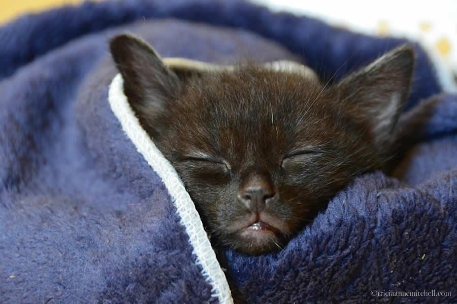 Ukrainian Street Kitten Sleeping