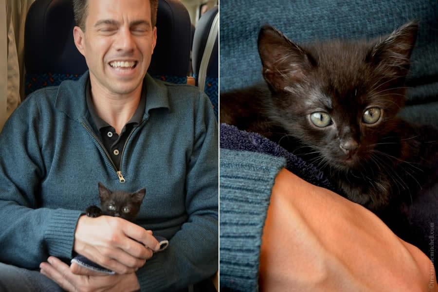 Ukraininan Kitten on Train