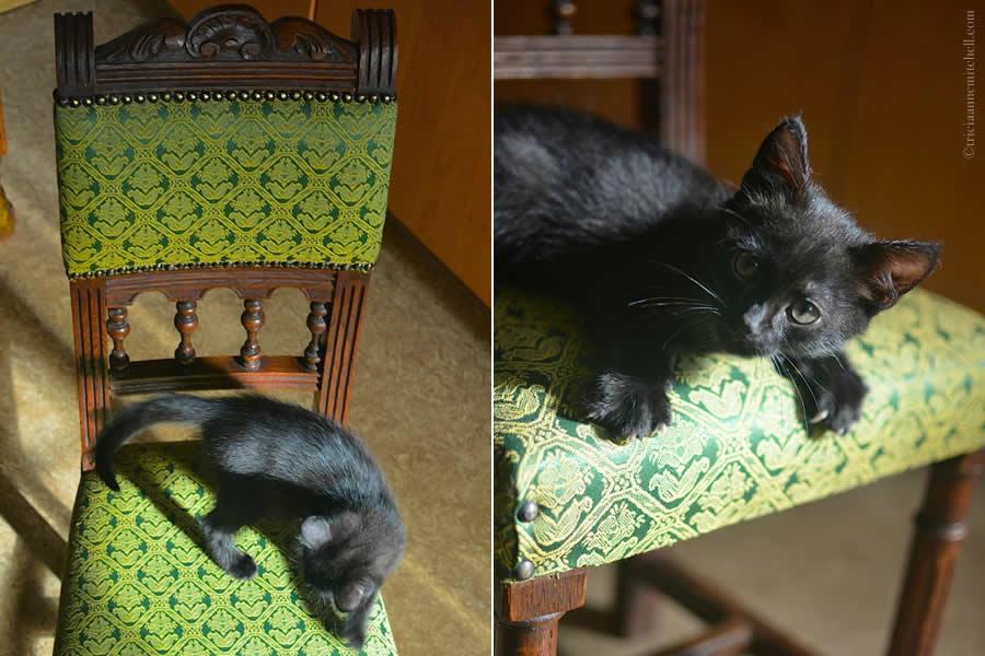 Cocoa Kitten 2