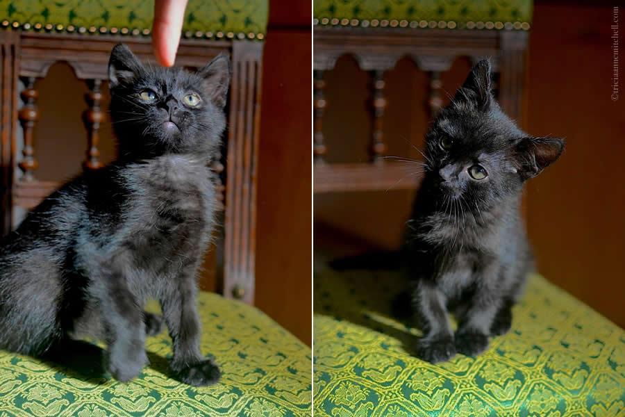 Cocoa Kitten 3
