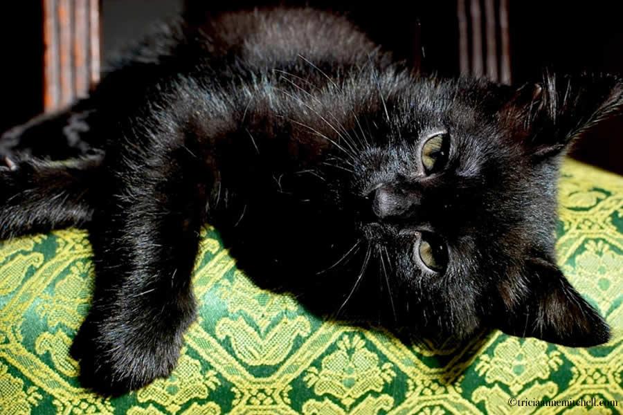 Cocoa Kitten 5
