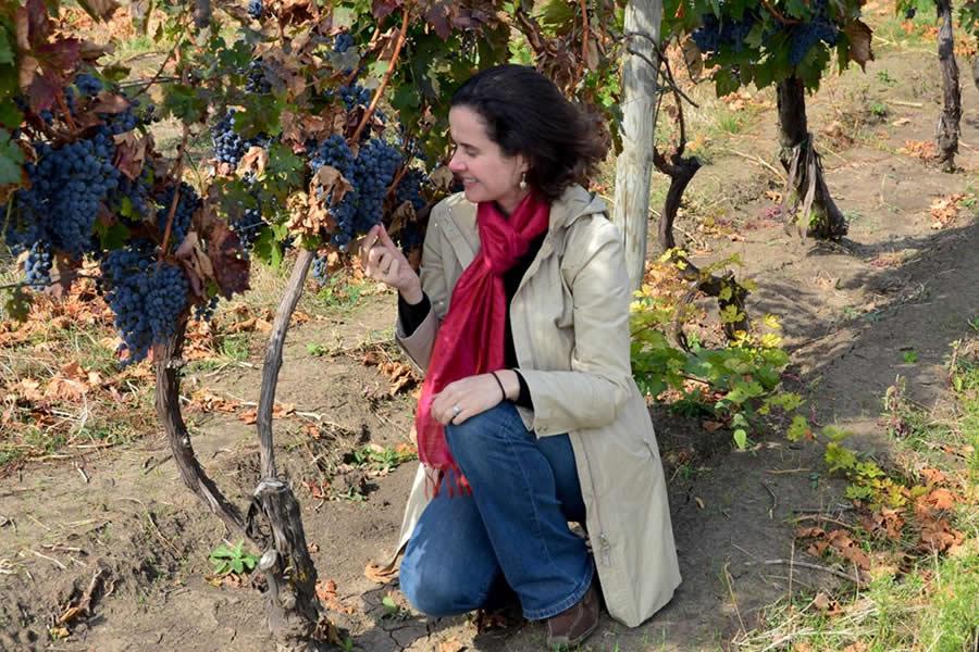 Et Cetera Winery Moldova