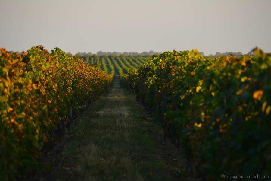 Et Cetera Winery Vineyards Moldova