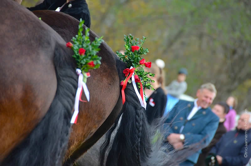 Leonhardiritt horse blessing in unterammergau horse tails decorated