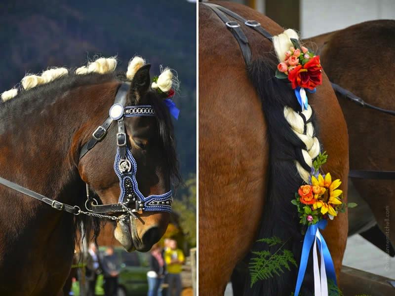 Unterammergau Leonhardiritt parade horse