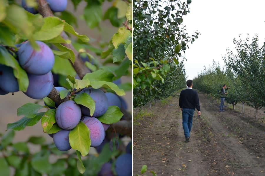 Farm Prod Stefan Voda