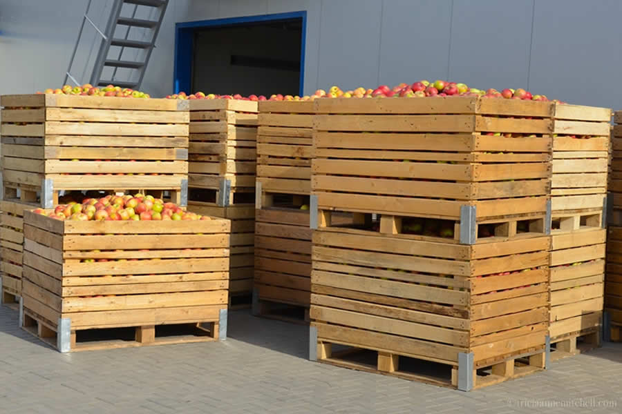 Moldova Apples Cold Storage
