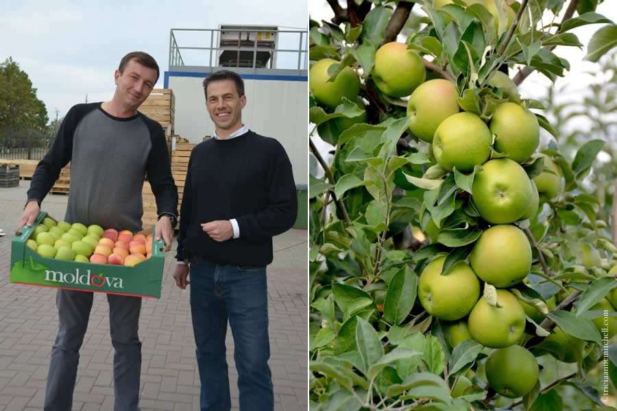 Moldovan Apples