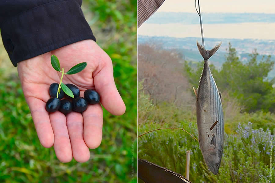 Fresh Olives and Palamida Fish in Split Croatia
