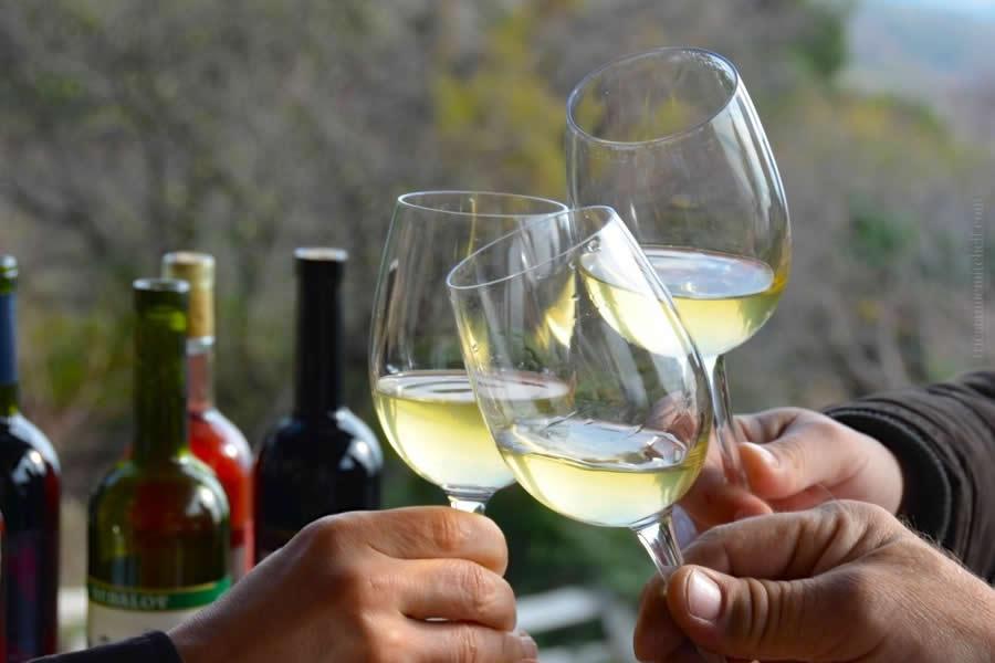glasses of Croatian wine marastina and hands toasting