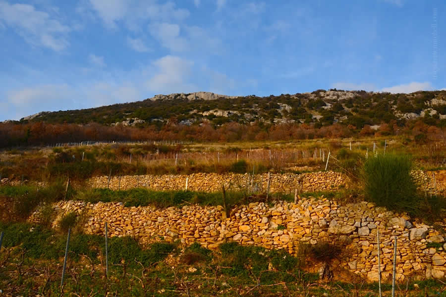 Kozjak Mountain Vineyards Split Croatia