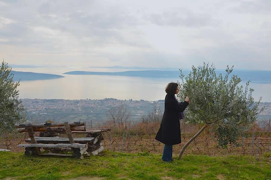 Picking Olives near Split Croatia