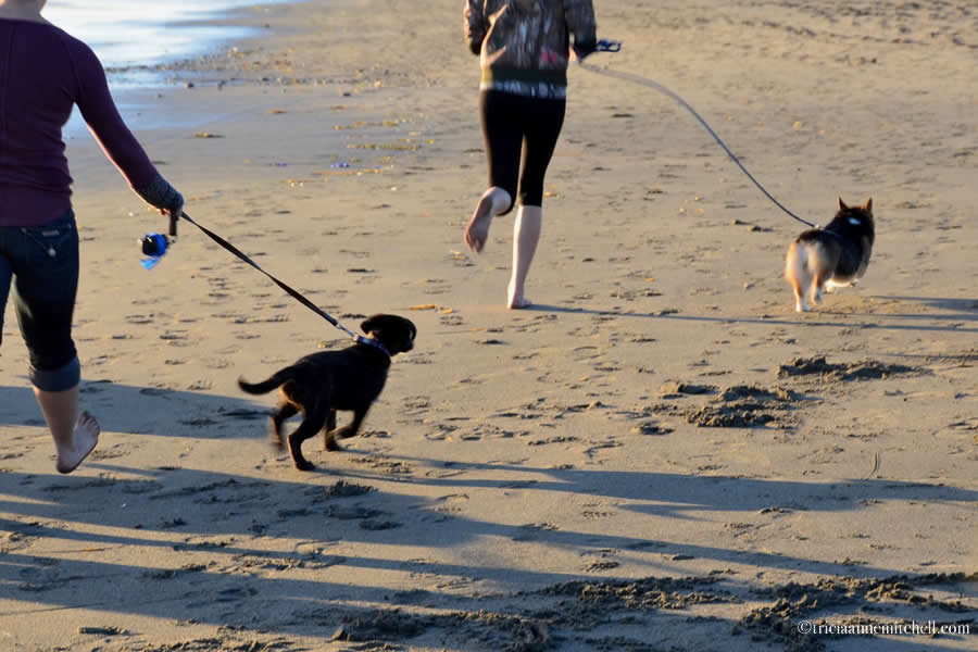 Dogs on Bodega Bay beach