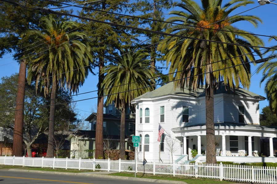 Palm Trees white picket fence California