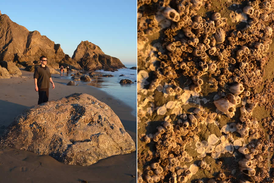 Shawn barnacles Bodega Bay