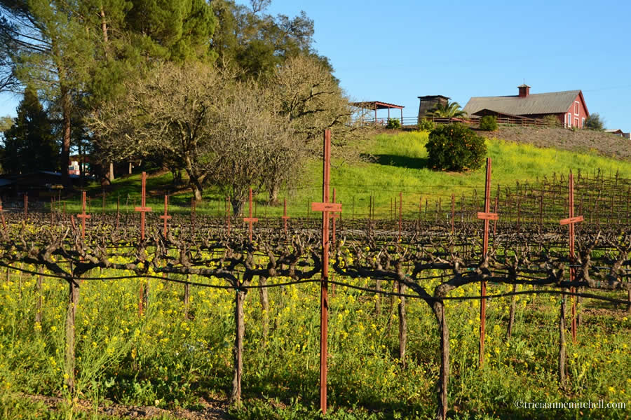 Sonoma Wine Dry Creek California