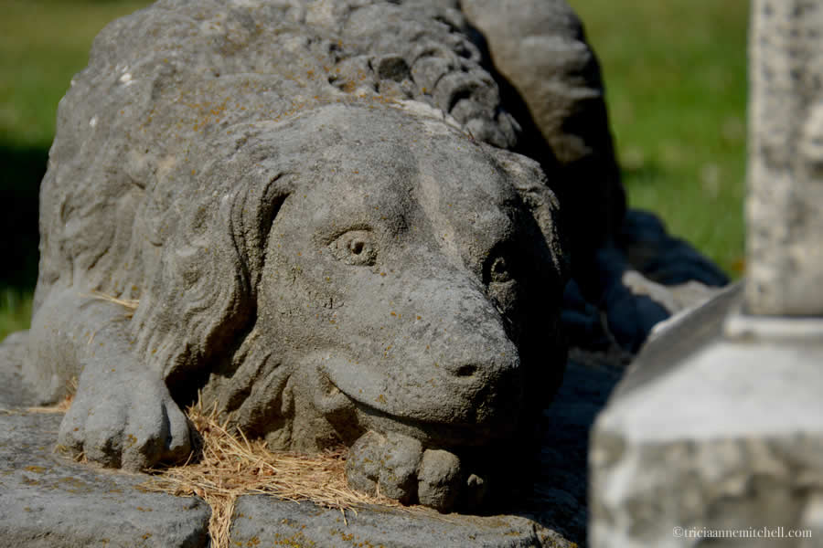 A gray stone statue of a Newfoundland dog overlooks the graves of Eddie and Josie Dimick in the Chippiannock Cemetery in Rock Island, Illinois.