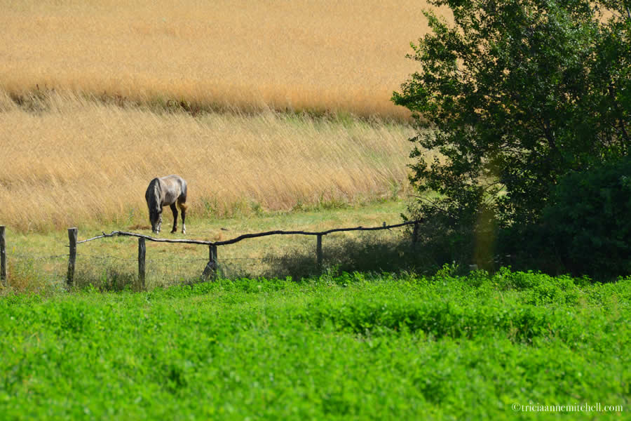 Horse Kalofer countryside