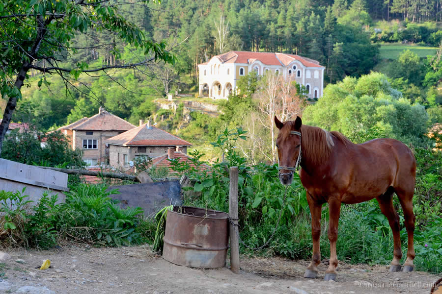 Kalofer Bulgaria horse