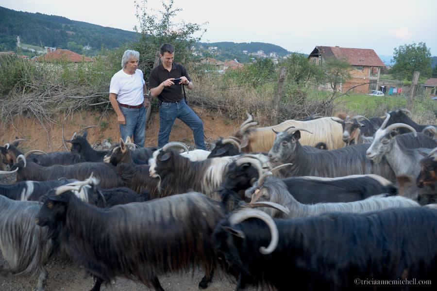 Kalofer Goat Procession Bulgaria
