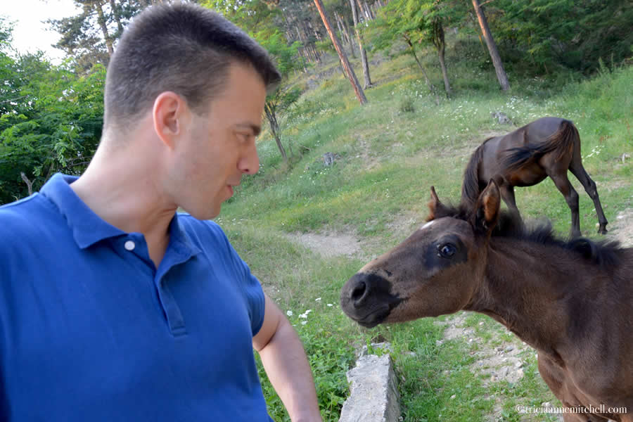 Shawn interacts with horse Kalofer