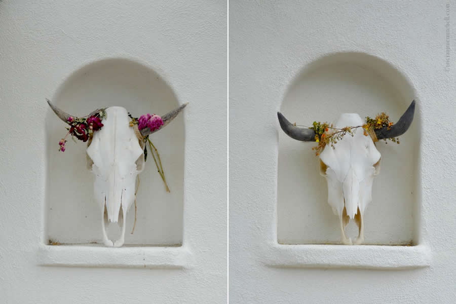 Cattle Skulls Decorative Los Alomos California