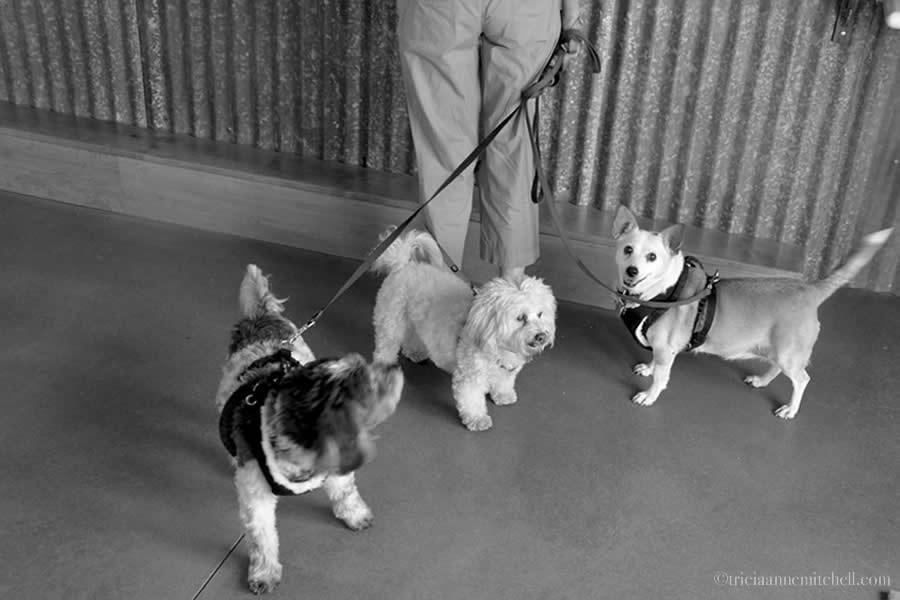 Dogs Santa Ynez Valley