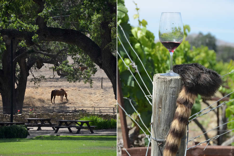 Fess Parker Winery Horses Davy Crockett