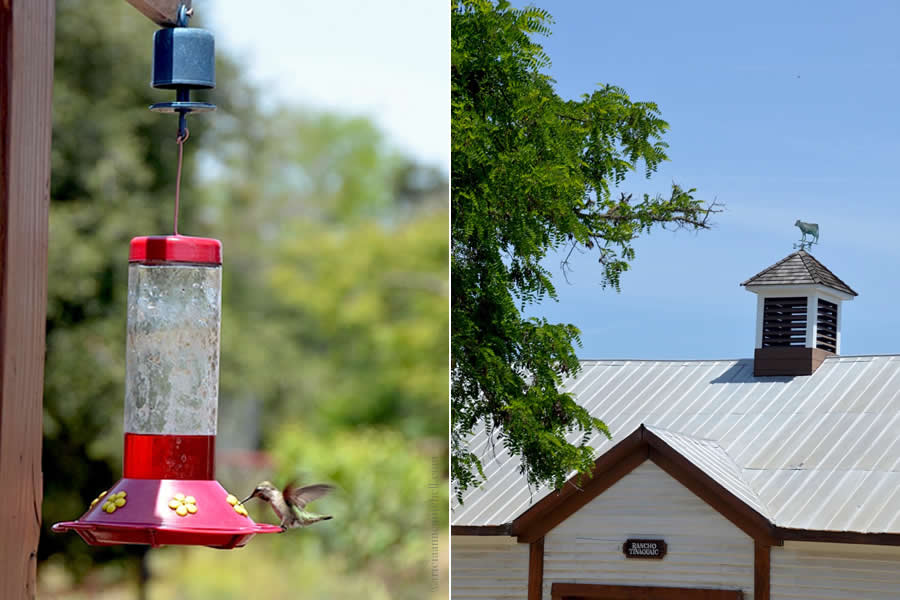 Foxen Winery Hummingbird Feeding