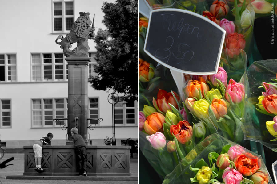 Heidelberg Fountain and Tulips