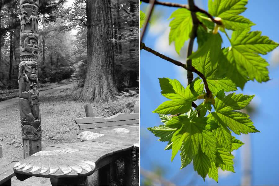 Heidelberg Hiking Arboretum