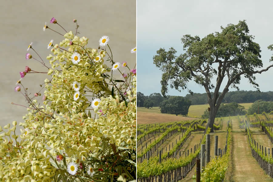 Jack Creek Winery Paso Robles