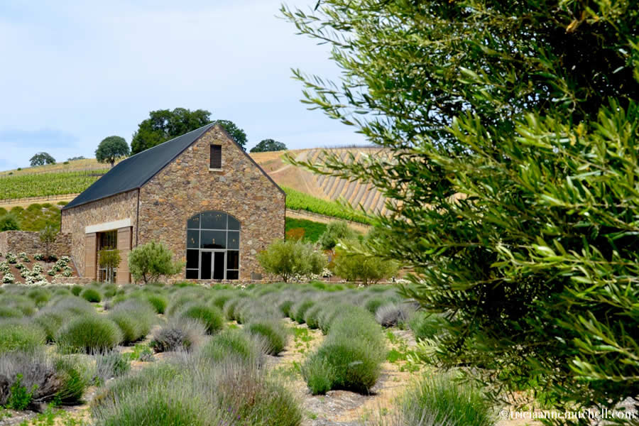 Niner Wine Estate Paso Robles