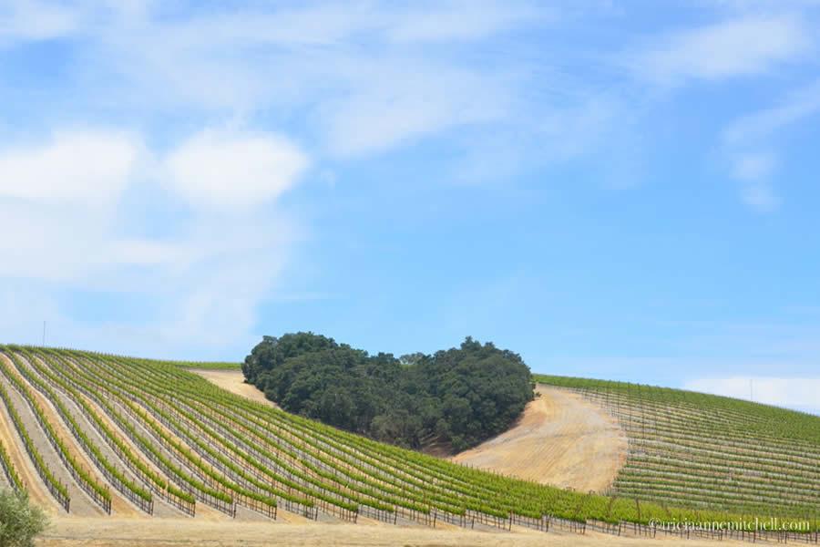 Niner Wine Estates Heart Vineyard